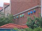 lergravsparken-house-bird-boxes.jpg